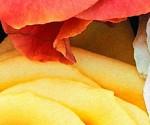 Prosperidade no lar com flores e essência