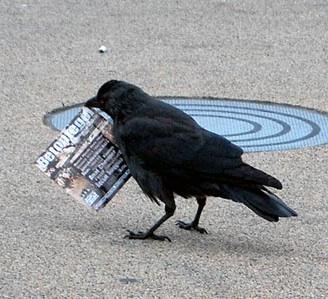 Inteligencia dos corvos